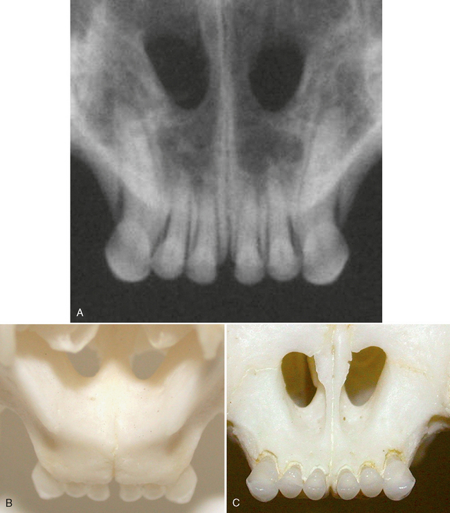 Intraoral Radiographic Anatomy of the Cat | Veterian Key