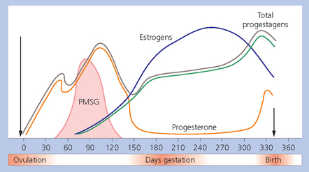 PREGNANCY   Veterian Key
