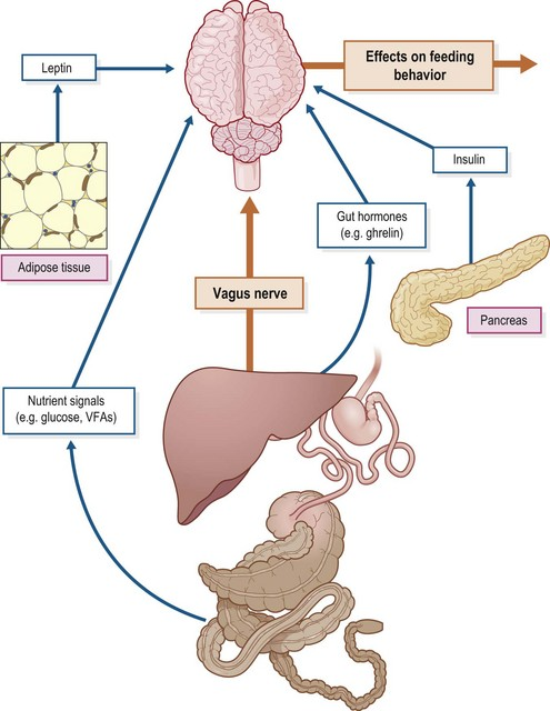 Endocrine and metabolic physiology veterian key image ccuart Gallery