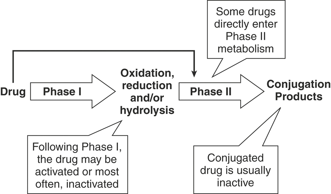 prednisone metabolites Prednisone 20mg is intended to about prednisone 20mg tablets prednisone 20mg is intended to prednisone affects the endocrine system and the metabolism.