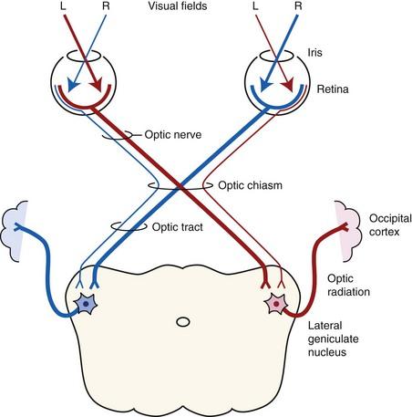 Equine Ocular Examination Routine And Advanced Diagnostic