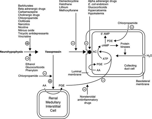 diabetes insipidus in dogs pdf