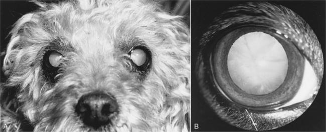 Сахарный диабет и слепота у собак
