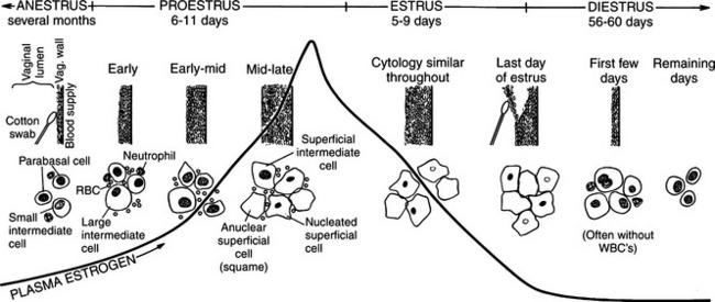 Vaginal cytology in buffaloes