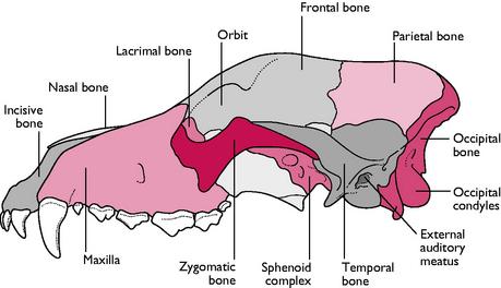 skeletal system | veterian key, Human Body