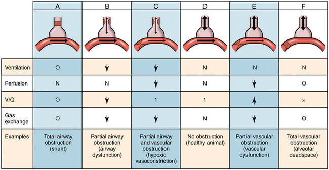 Ventilation Perfusion Ratio : The respiratory system anatomy physiology and