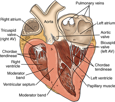 The cardiovascular system anatomy physiology and adaptations to figure 11 1 cross section of the equine heart showing the cardiac chambers and valves and direction of blood flow ccuart Images