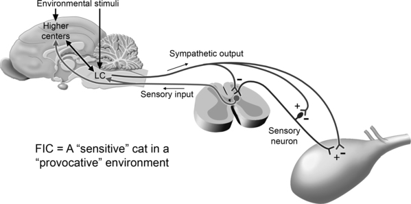 Nonobstructive idiopathic or interstitial cystitis in cats figure 10 3 interactions among environmental stimuli the central nervous system and the bladder can produce clinical signs of fic when a sensitive cat is ccuart Choice Image