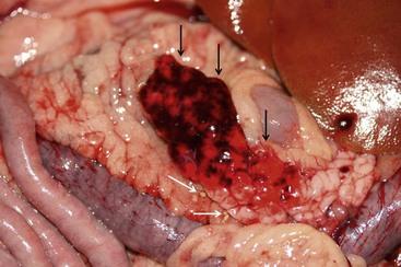 Pancreas | Veterian Key  Pancreas | Vete...