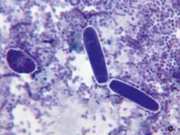 Dry Mount Fecal Cytology Veterian Key
