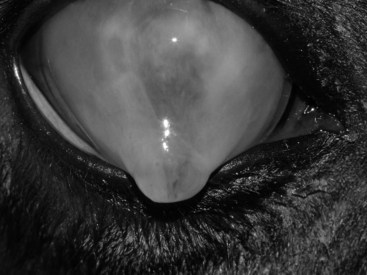 equine fungal keratitis - photo #42