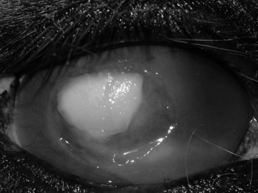 equine fungal keratitis - photo #20