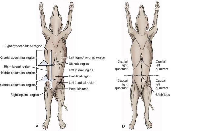 Peritoneum and retroperitoneum veterian key image ccuart Choice Image
