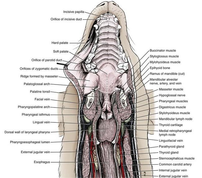 Canine Oral Anatomy Picsbud