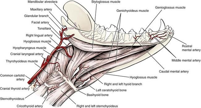 Dog Teeth Anatomy