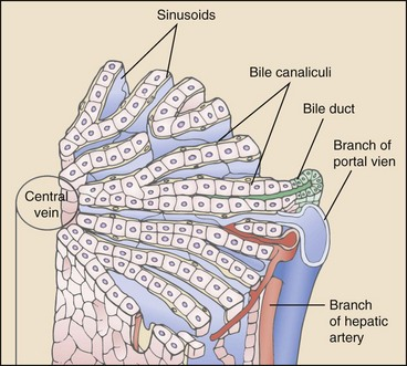 Hepatic Vascular Anomalies | Veterian Key