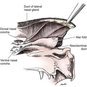 Nasal Planum, Nasal Cavity, and Sinuses | Veterian Key