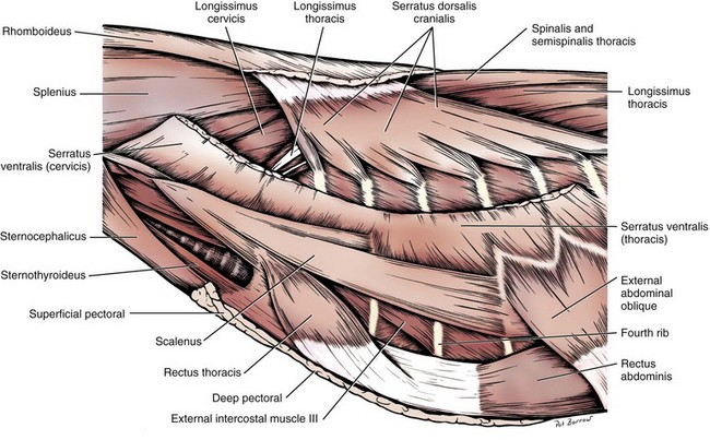7937 in addition Foot further Mauritian tomb bat as well Central Nervous System Intro To Brain And Ventricles Medulla Oblongata Pons Mid Brain And Cerebellum furthermore Anatomy Of Cerebellum. on dorsal ventral surface