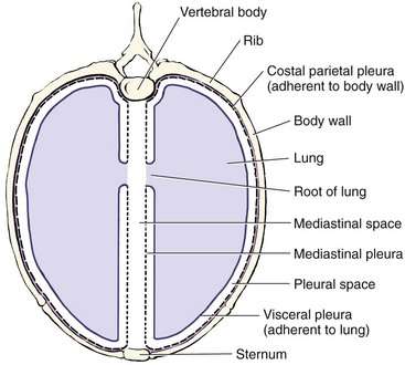 Thoracic Cavity Veterian Key