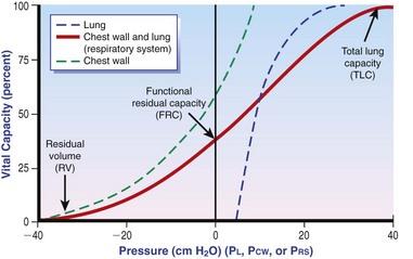 Astonishing Thoracic Cavity Veterian Key Wiring Cloud Aboleophagdienstapotheekhoekschewaardnl