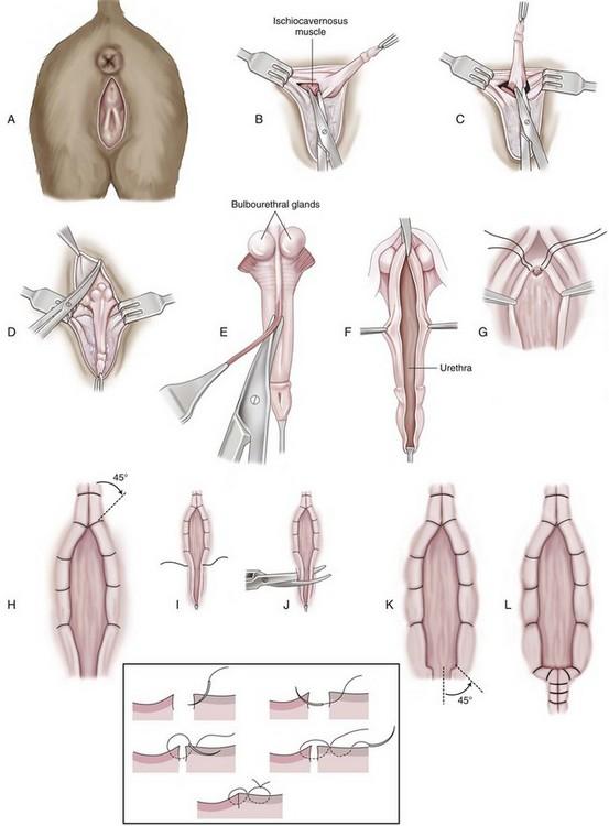 Urethra | Veterian Key