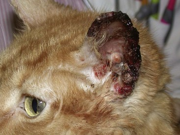 Cat Ear Canal Tumor Prognosis