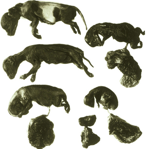 Canine Brucellosis | Veterian Key Brucellosis In Dogs