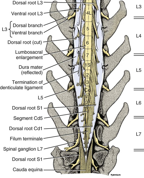 Spinal Cord and Meninges | Veterian Key
