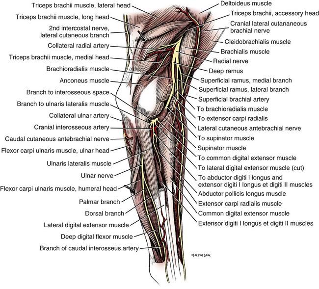 Spinal Nerves | Veterian Key