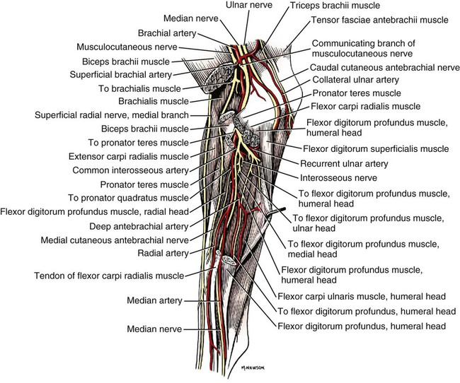 Spinal Nerves Veterian Key