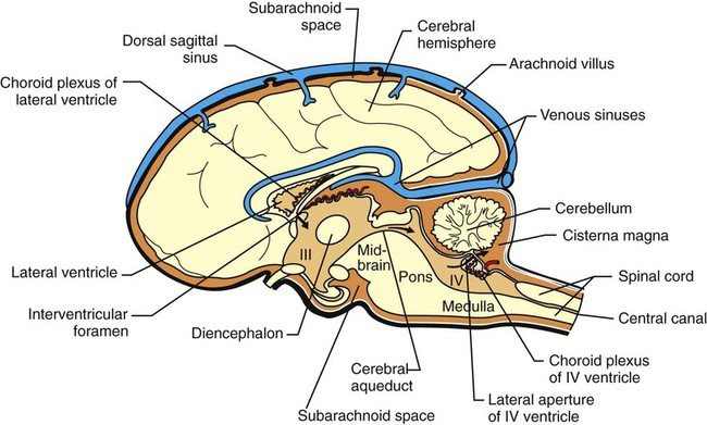 Cerebrospinal fluid and the blood brain barrier veterian key figure 15 3 midsagittal section of the brain showing portions of the ventricles and subarachnoid space the choroid plexuses that produce csf ccuart Choice Image