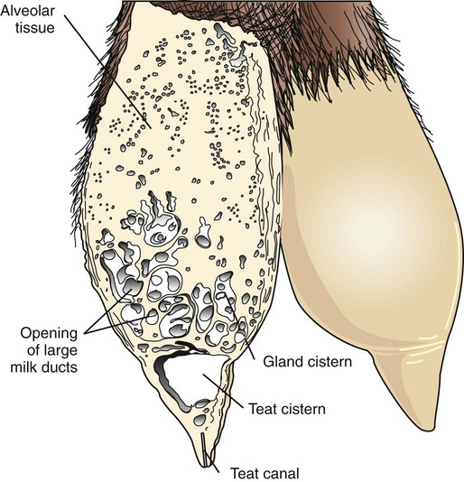 The Mammary Gland Veterian Key