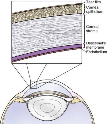 Cornea Anatomy