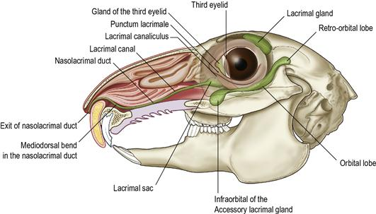 Ophthalmic Diseases | Veterian Key