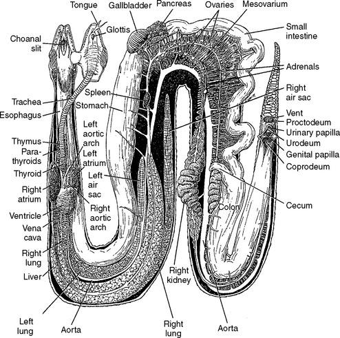 Анатомия мамбы
