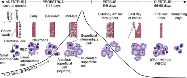 Vaginal smear cytology