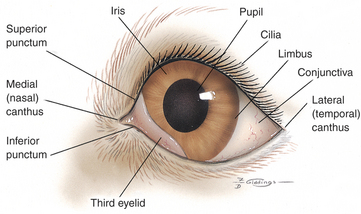 structure of human eye and its functions pdf