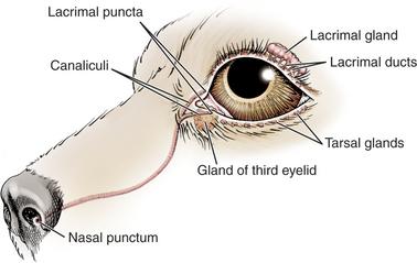 B Gr on Cow Eye Diagram