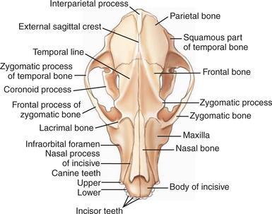 7299036 besides Appendicular Skeleton 39050633 likewise 13557736 as well 13100482 as well Chapter 1. on dorsal cavity anatomy