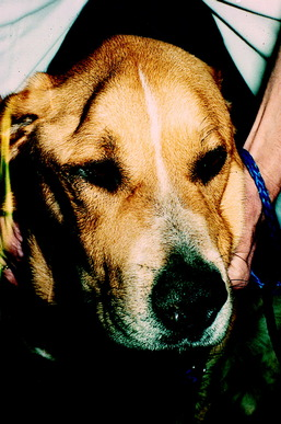 Can A Dog Damage Its Cranial Nerve