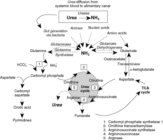 Fluid  Electrolyte  And Acid