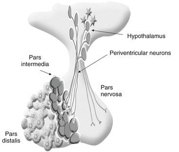 endocrine and metabolic diseases   veterian key, Human Body