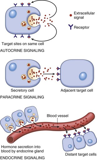 Endocrine system veterian key 12 1 schematic diagram of the patterns of intercellular signaling see text modified from lodish h baltimore d berk a et al editors molecular cell ccuart Choice Image