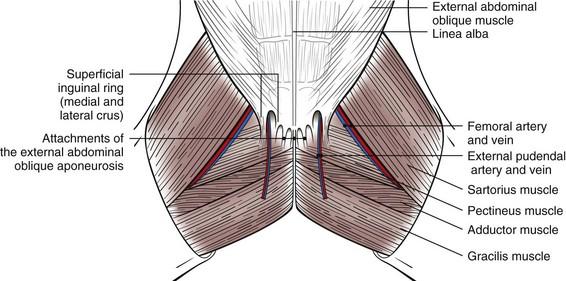 Surgery Of The Abdominal Cavity Veterian Key