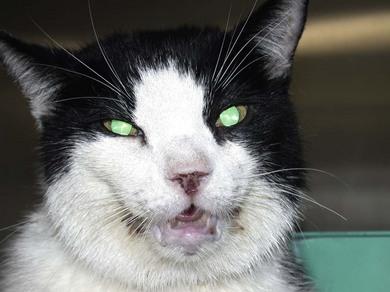 Oropharynx Cat Pharynx   Veter...