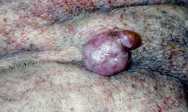 neoplastic and nonneoplastic tumors veterian key