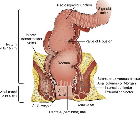 Anorectal Procedures | Veterian Key