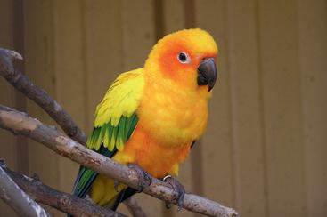 BIRDS   Veterian Key