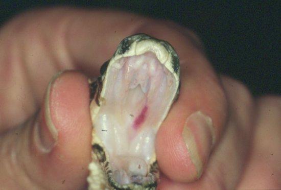 Snake in my vagina