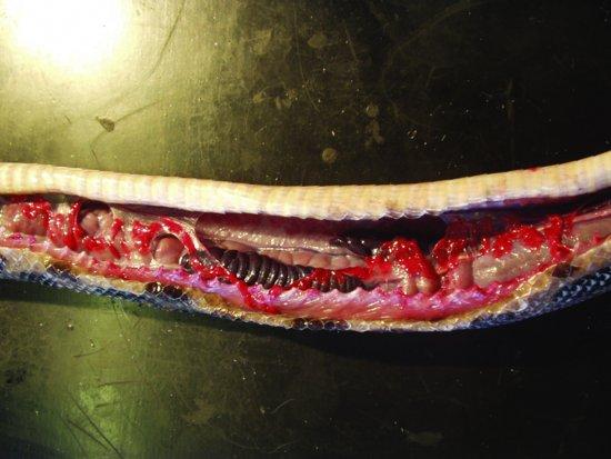 basic reptile and amphibian anatomy and physiology